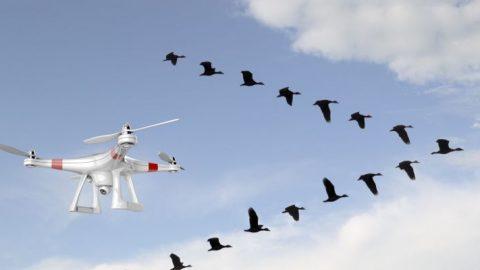 Drone pode ser usado para afastar aves das proximidades de aeroportos.